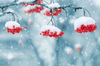 snow-on-berries-Janice-Heller-career-coach-holiday-job-search-tips